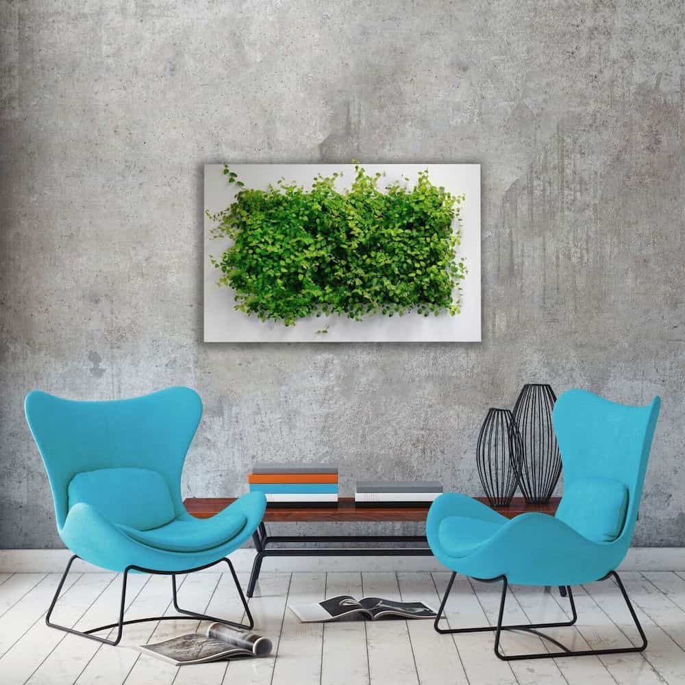 blue chairs, green living wall