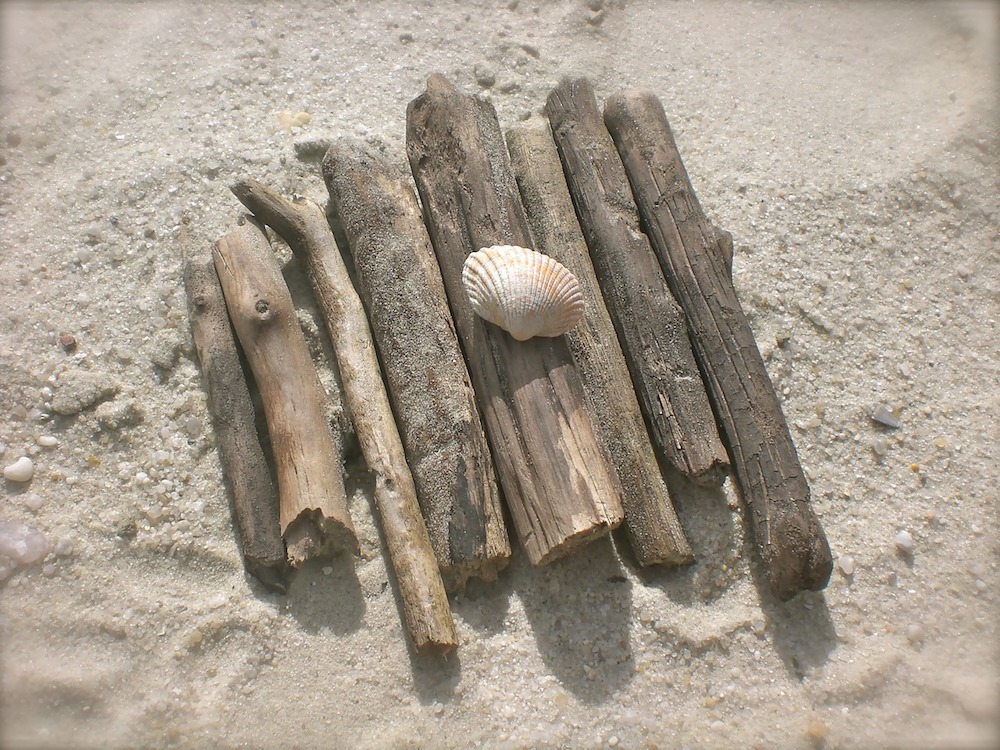 close up of driftwood sticks with a shell on the beach