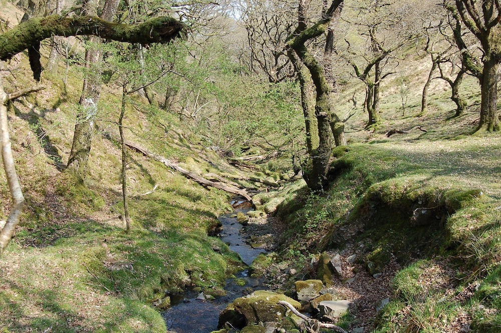 streams running through exmoor national park