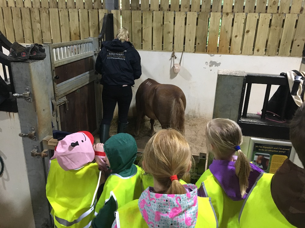 children looking at ponies in a stable