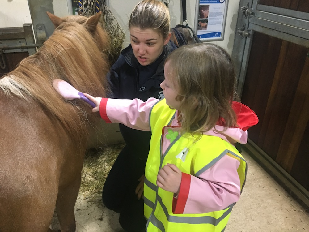 little girl being shown how to groom a pony