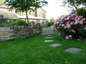 rhododendrons and lawn