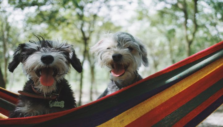 two dogs looking happy