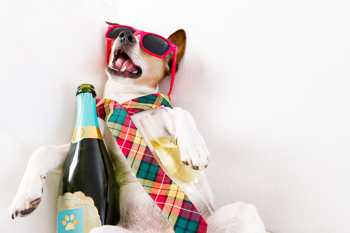 Dog wearing tie and sunglasses with bottle of champagne