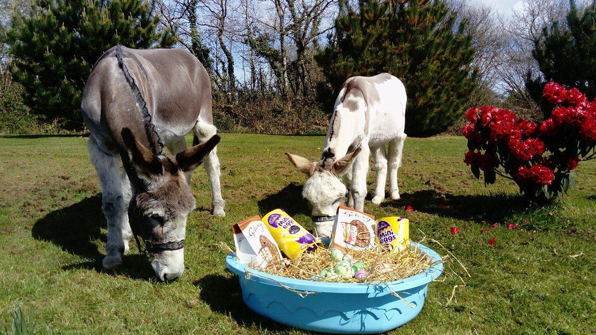 donkeys with easter eggs