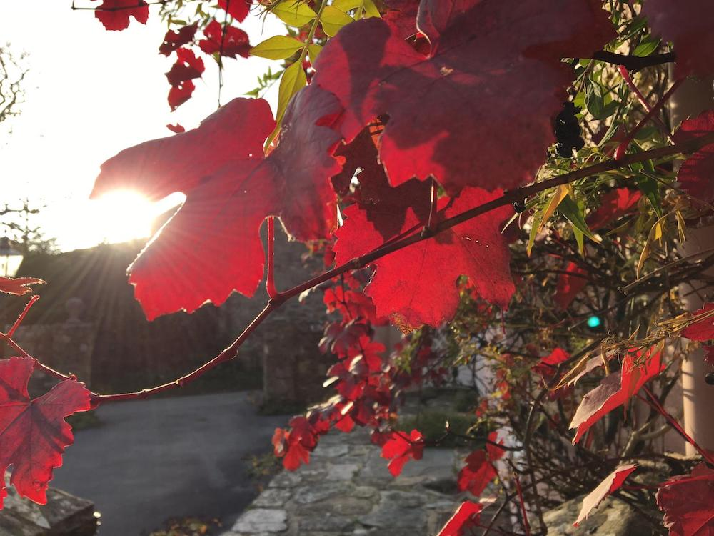 red leaves sun